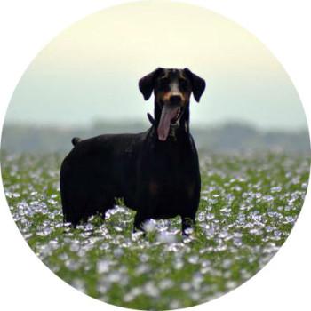 Dog Behaviourist Brighton & Hove